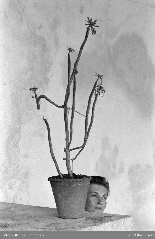 Fotografens hustru Elsie poserar vid en krukväxt. Hvar, Jugoslavien.