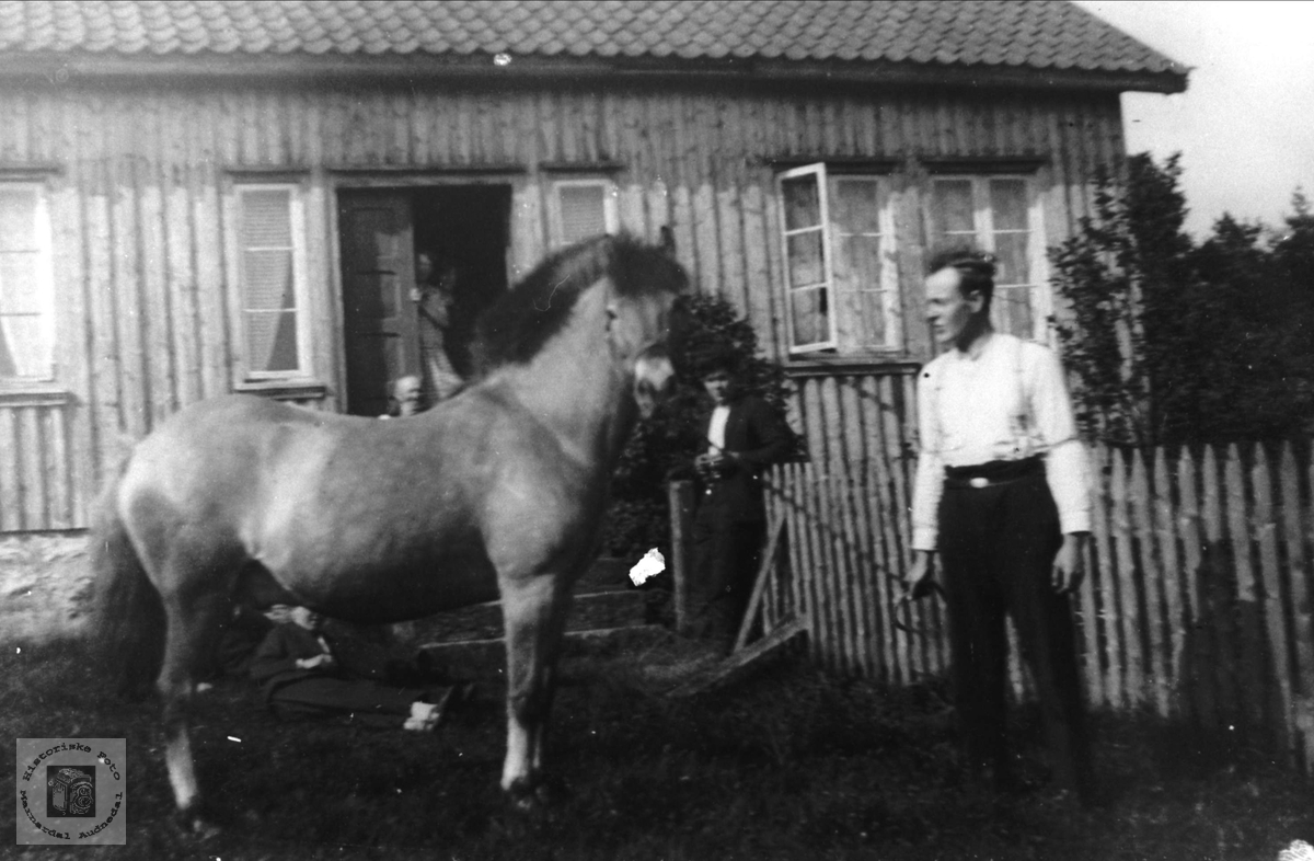 Hestevisning