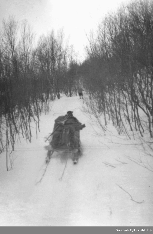 Påsken 1950. Sigbjørn Isaksen, Petter Hildonen og Fritz Ebeltoft gikk på ski fra Vadsø til Tana. De hadde Petter Hildonens hunder med på turen