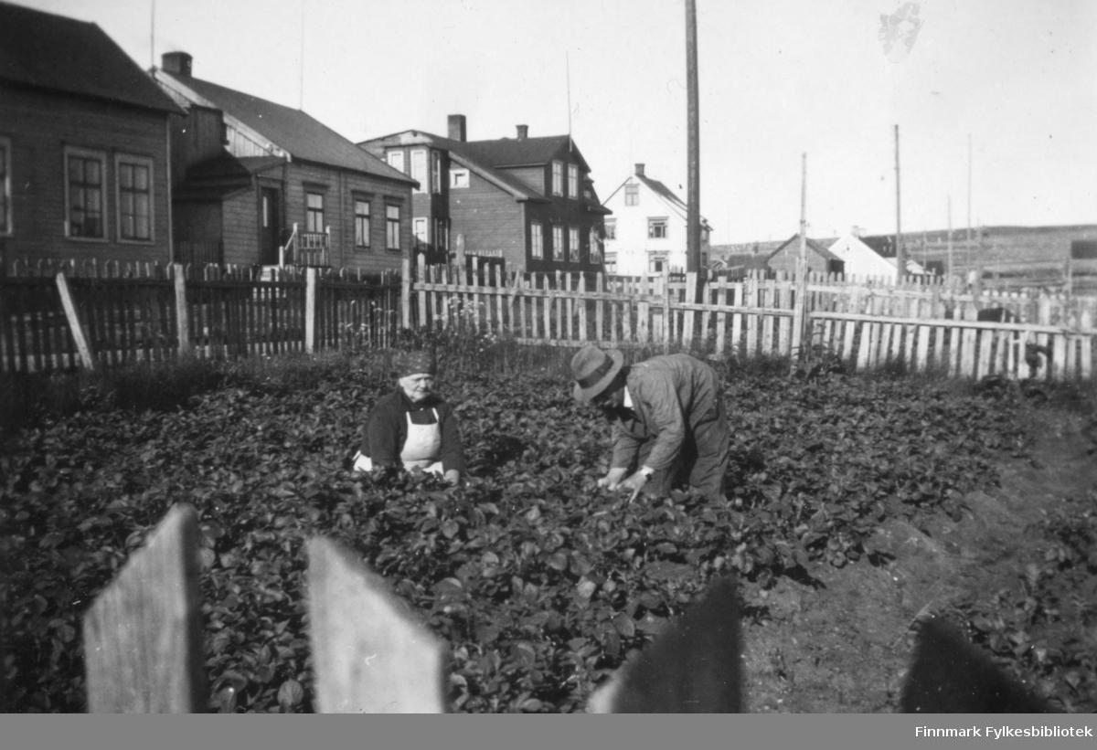 Marie og Andreas Berg arbeider i potetåkeren som lå sør for familiens bolighus i Oscarsgate. I bakgrunnen ser vi bebyggelsen videre utover langs Oscarsgate
