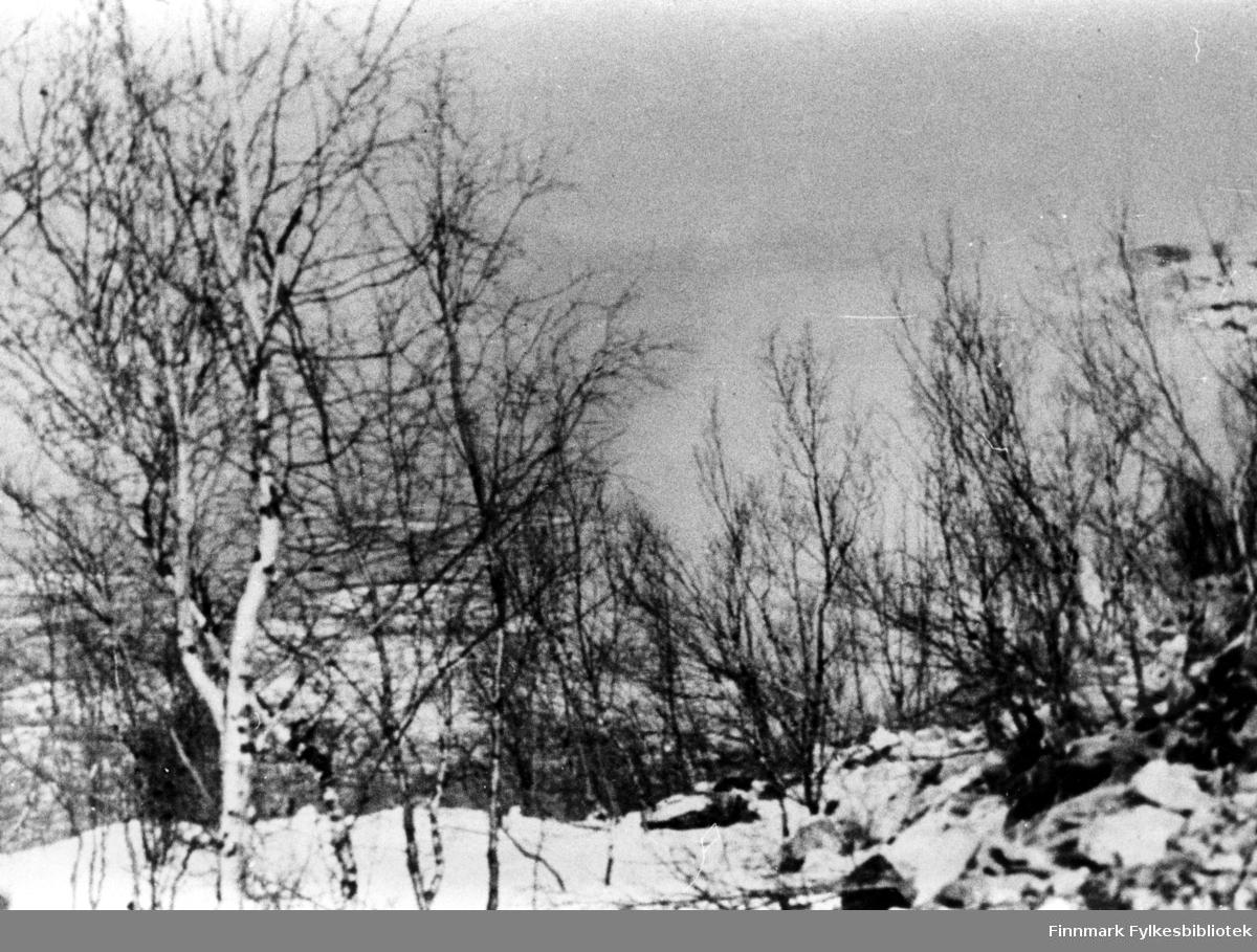 Fotografi av en spregning. Det er ikke mye man ser til spregningen, man ser bare noen trær.