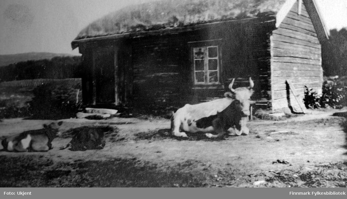 Gården Strømsnes i Jarfjord, bildet tatt sommeren 1924. Bildet viser et uthus på gården. Foran uthuset ligget to kalver og en ku. Uthuset har torvtak og man kan se en dør og et vindu på bygningen. En liten trapp fører opp til døren. På husets høyre vegg kan man se at det lener seg en planke. I bakgrunnen kan man se et lite fjell.