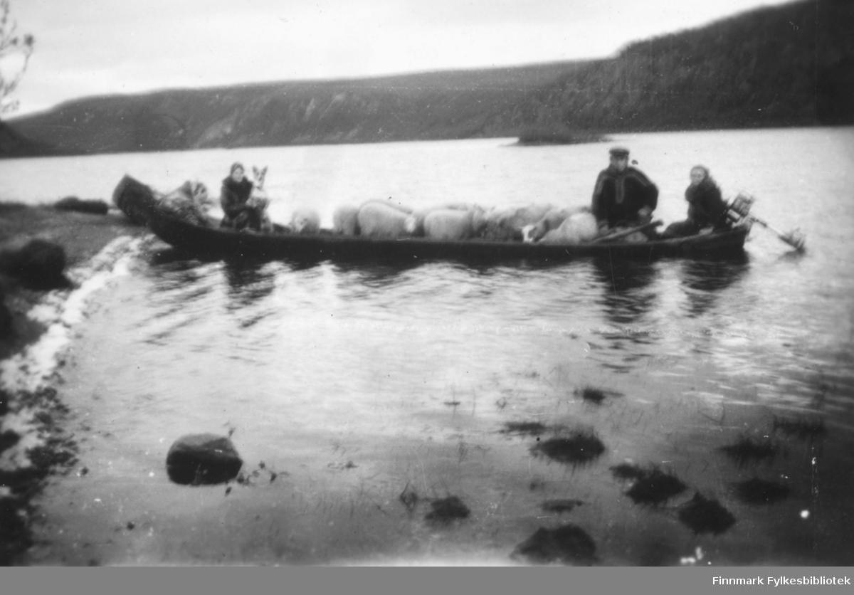 Sauefrakting på Altaelva. Vi ser en elvebåt fylt med sauer. Elvebåten har påhengsmotor på høyre ende. I den venstre enden sitter en kvinne og holder den hund i armene. Trolig Magna Wisløff. I den høyre enden sitter en mann og en kvinne. Mannen er trolig Kristian Wisløff. Rundt ser vi Altaelva og i bakgrunnen ser vi skogskledd landområde langs elva. Ca.1930-40 tallet.