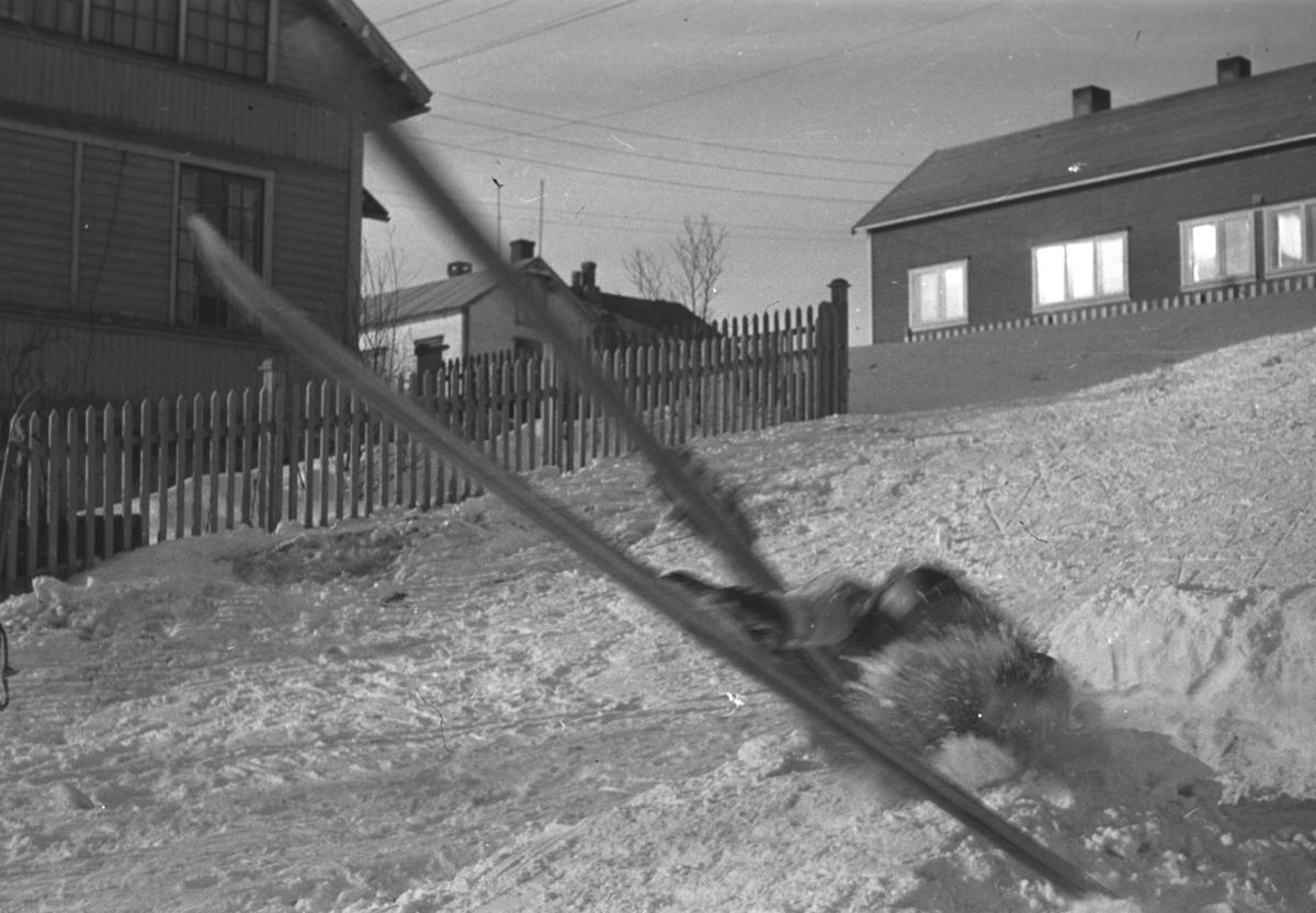 Vinterdag i Nyborgveien i Vadsø. Hauges hus ses helt til ventre i bildet.