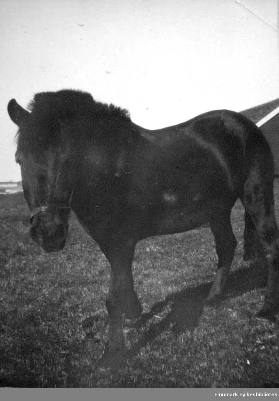 En hest, muligens en Dølahest, står ute i solskinnet. Bakken er gressdekt og en liten del av røstveggen på et bygg ses lengst til høyre på bildet.