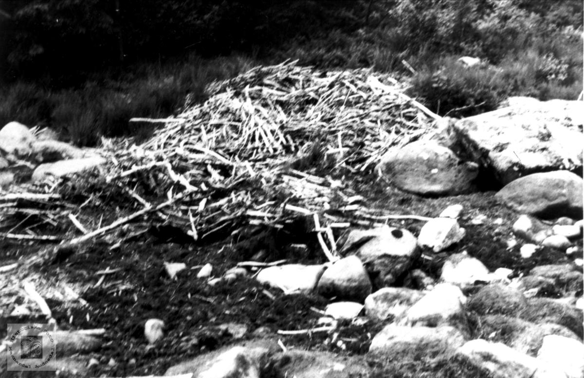 Beverhytte i Mandalselva ovanfor Kavfossen