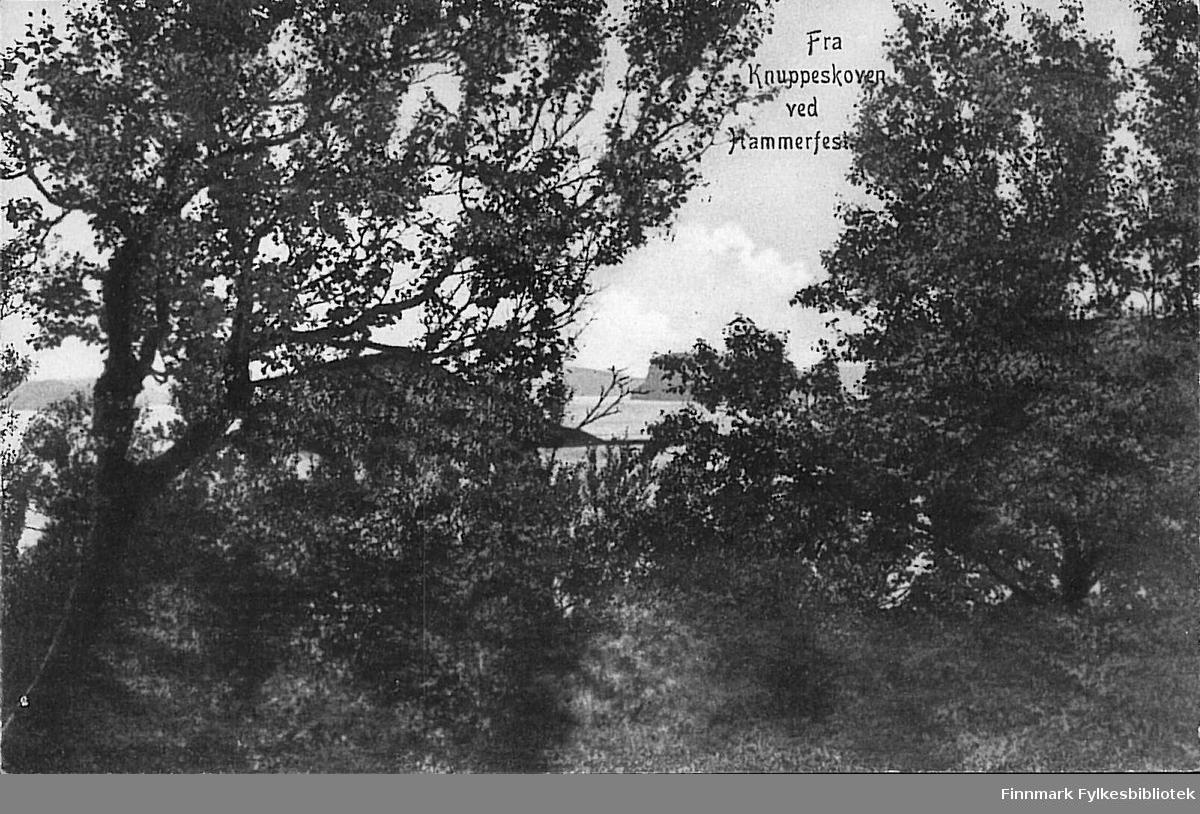 Postkort med motiv fra Knuppeskoven ved Hammerfest. Kortet er en jule- og nyttårshilsen til Arthur og Kirsten Buck på Hasvik og det er sendt fra Breivikbotn i desember 1908.