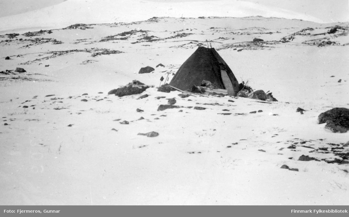 En lavvo er satt opp på fjellet. Stedet er ukjent, men bildet er tatt i april/mai 1948.