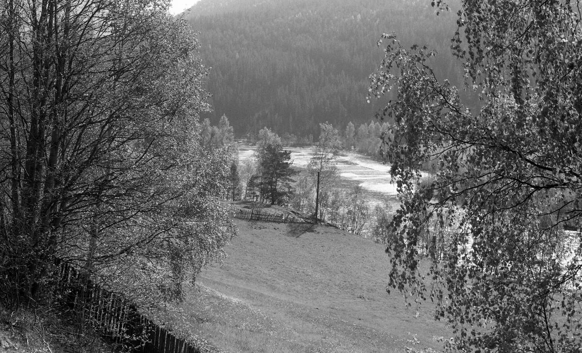 Landskapsbilde, elv, fjell, gjerde, bjørk. Lam, Otta.