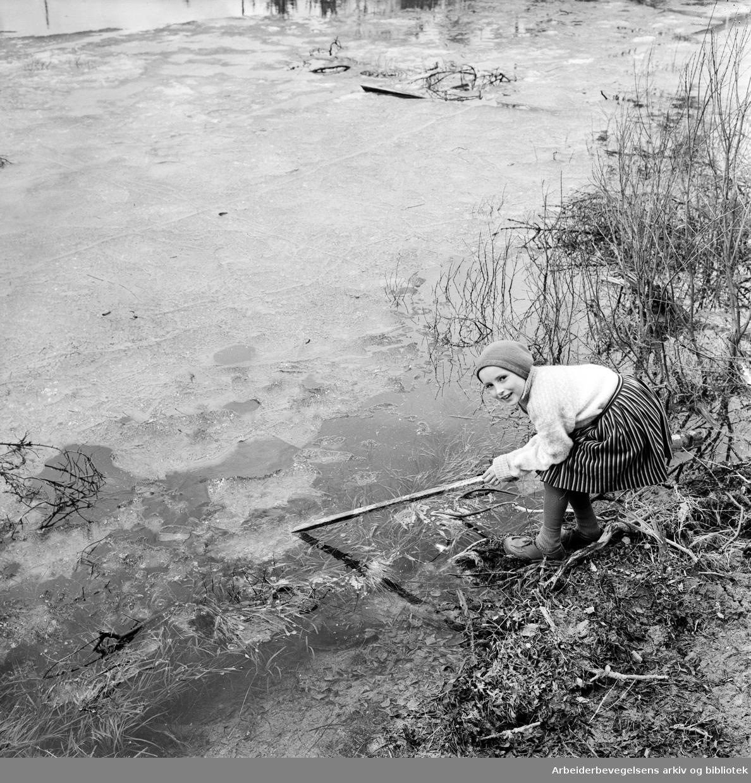 Sen vår i Oslo-området. Thorunn slår hull i isen på Sværsvann. Ingen øvrige oppl. Mai 1962.