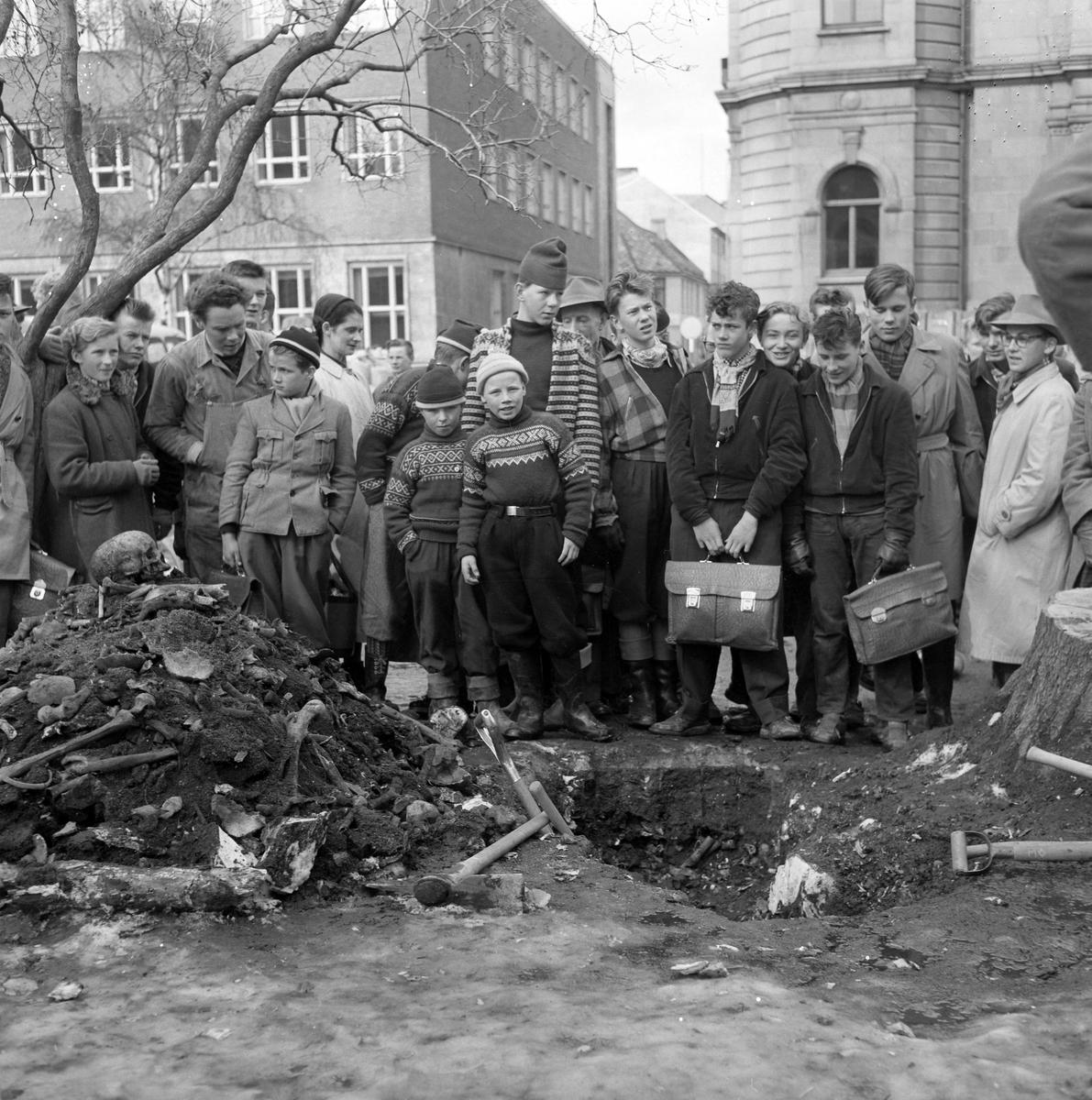Funn av skjelettrester ved fjerning av gammel ask i Tordenskioldsparken