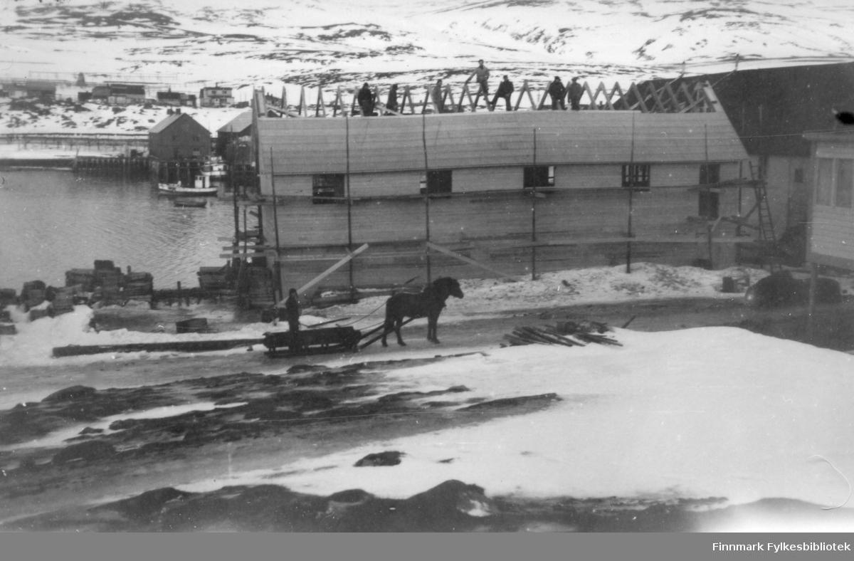 Martens fiskebruk i Båtsfjord i 1947, gjenoppbygging, utbygging etter krigen.