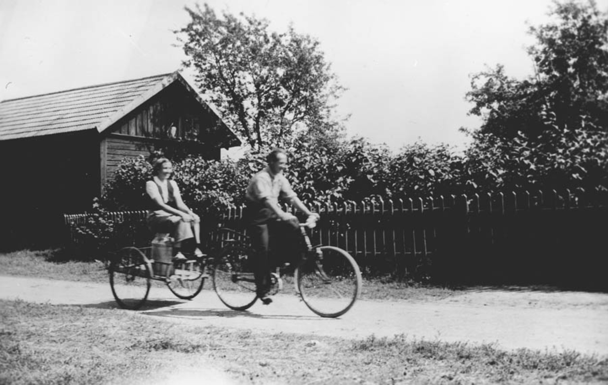 Melketransport på sykkel