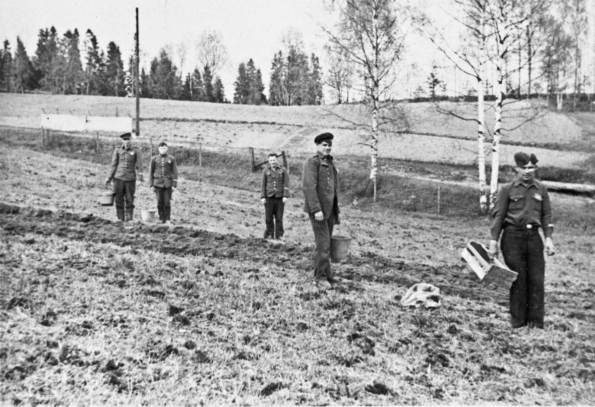Russiske fanger på Håpet setter potet.