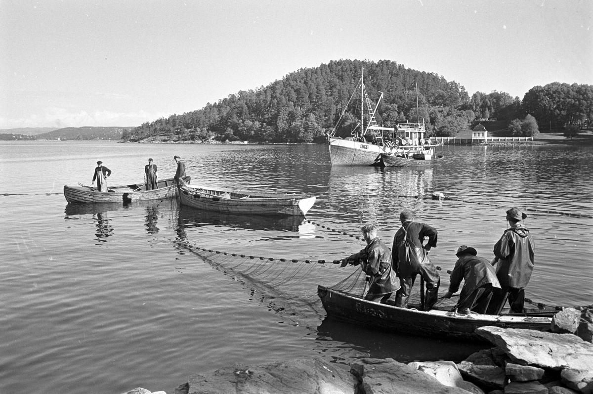 Serie. Brislingfiske i Hvervenbukta, Oslo. Fotografert: 1961