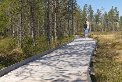 Plankeveg langs Hyttelva 2 06.06.2016