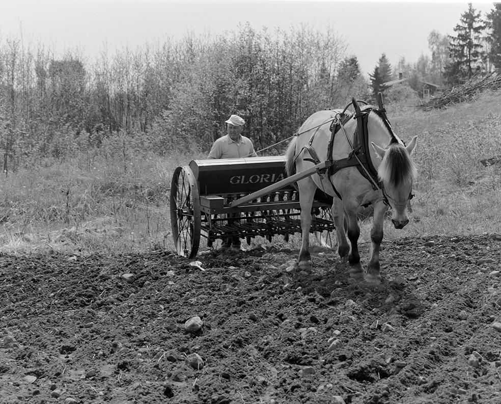 Våronn, Nordvold gard, Gnr.43, bnr.5, Løten. Gardbruker Paul Nordvold. Hest, hesteredskap, såmaskin,