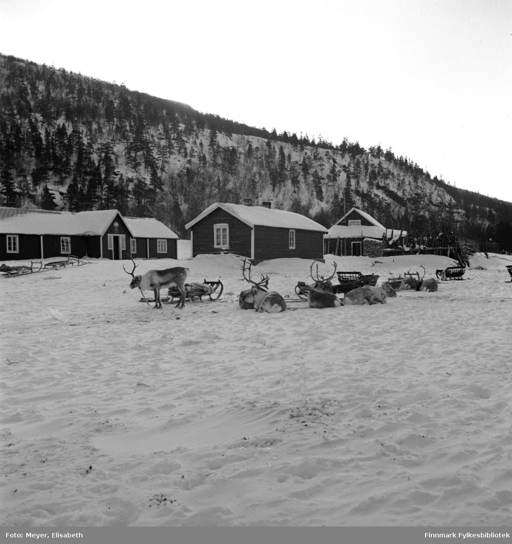 Statens Fjellstue Gargia fotografert vinterstid. Foran fjellstuene ligger kjørerein og hviler i snøen.