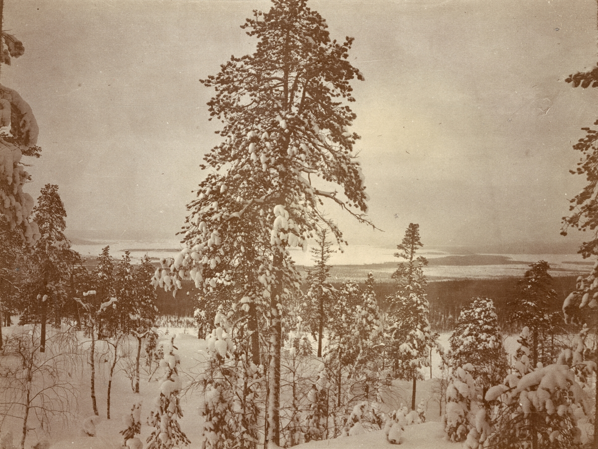 Utsikt över vinterlandskap, Smålands husarregemente K 4 på vinterövning i Norrbotten omkring 1910.