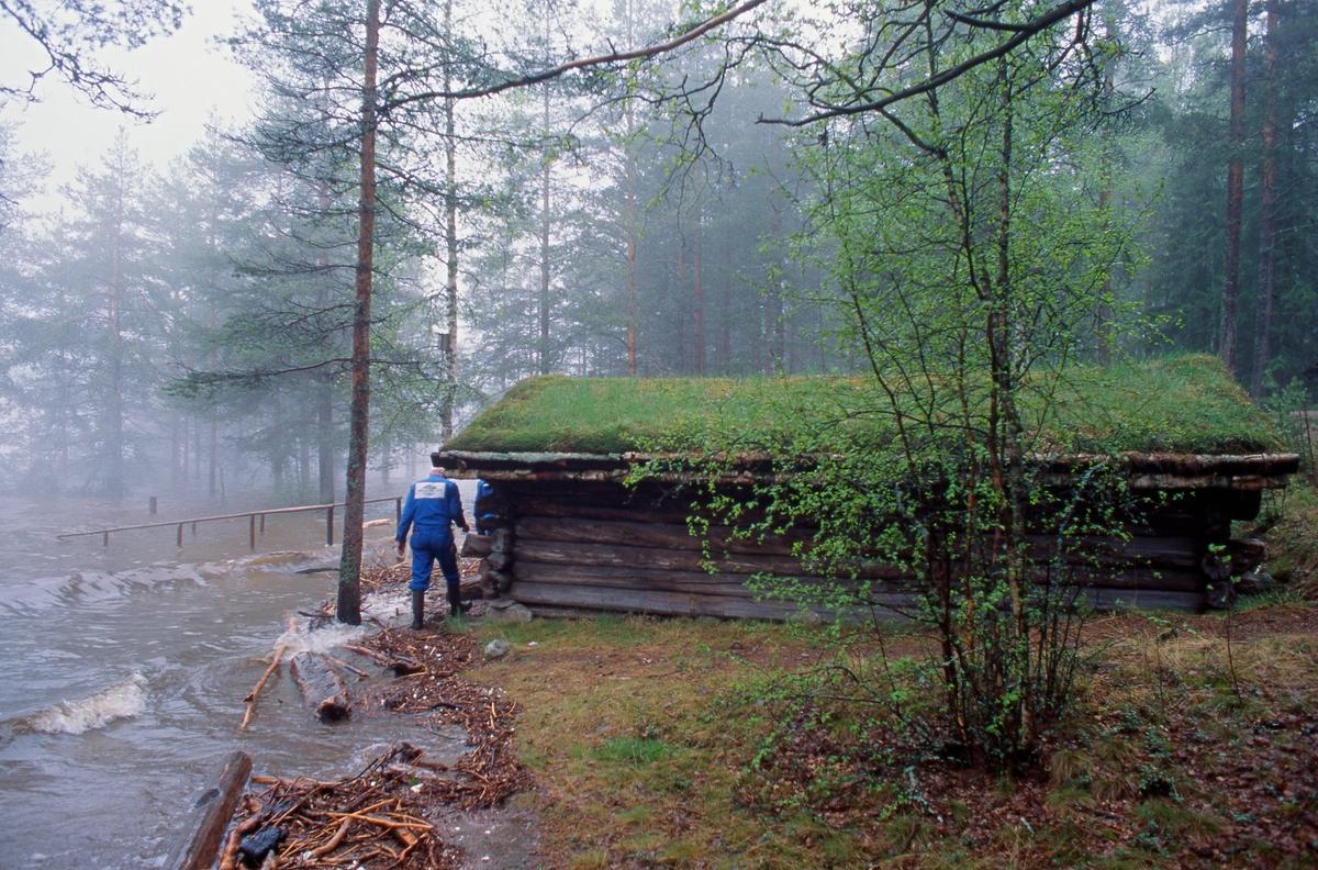 Fra storflommen i Glomma i 1995.  Fotografiet er tatt i Norsk Skogbruksmuseums friluftssamling på Prestøya, der man i slutten av mai begynte å ane at bygningssamlinga ville bli berørt.  De bygningene som lå mest utsatt til var et par naust, som naturlig nok var plassert lavt i terrenget, om enn i god avstand fra den sonen der vannlinja vanligvis befinner seg.  På bildet ser vi Sølensjønaustet fra Øvre Rendal (SJF-B.0003), på et tidspunkt da vannet begynte å nærme seg den fremre gavlen.  Ved nova skimter vi museets daværende driftsleder, Håkon Sæle, som så an mulighetene for å binde fast bygningen.  Dersom vannet steg ytterligere var det jo fare for at hele trebygningen ville bli løftet opp, slik at den i verste fall kunne drive vekk med elvestrømmen.  Dette ble løst ved å trekke kjettinger eller vaiere på tvers av taket og forankre dem i steinblokker eller trær i omkringliggende terreng.