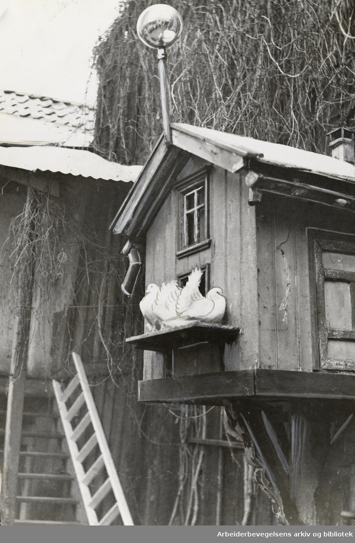 Lakkegata 48. Julemagasinet, 20. desember 1947