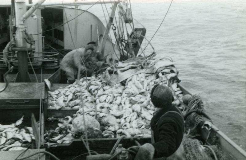 Fiskere på dekk med fangst