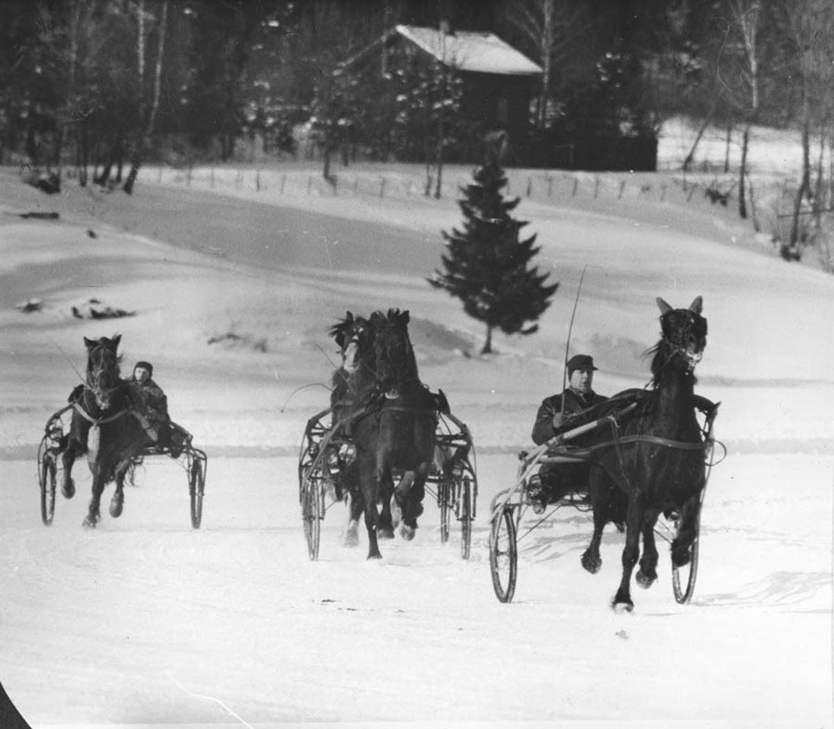 Travløp på Årungen. Vinterstid