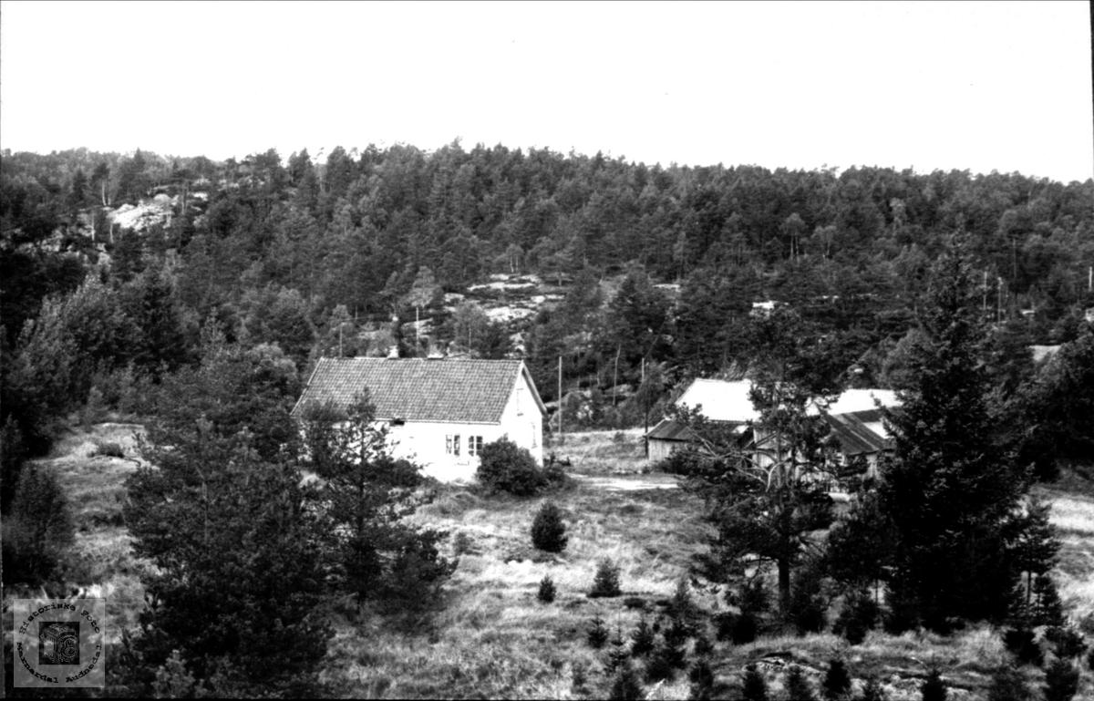 Villehei i Øyslebø.