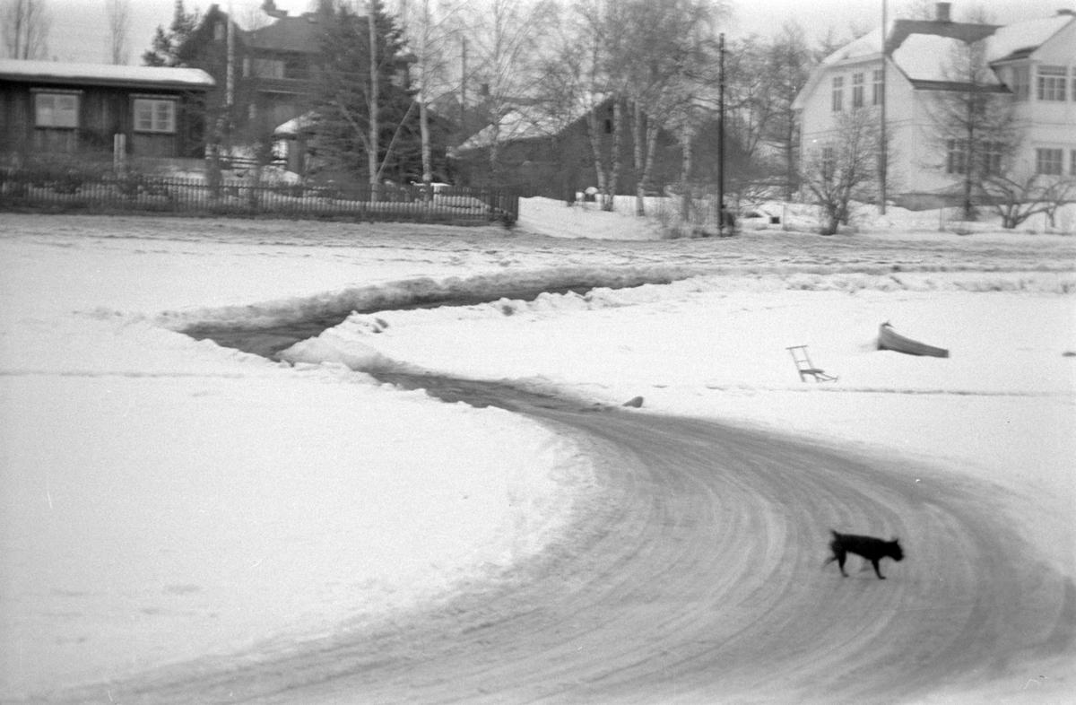 Tingnes, Nes Hedmark, isveg på mjøsisen