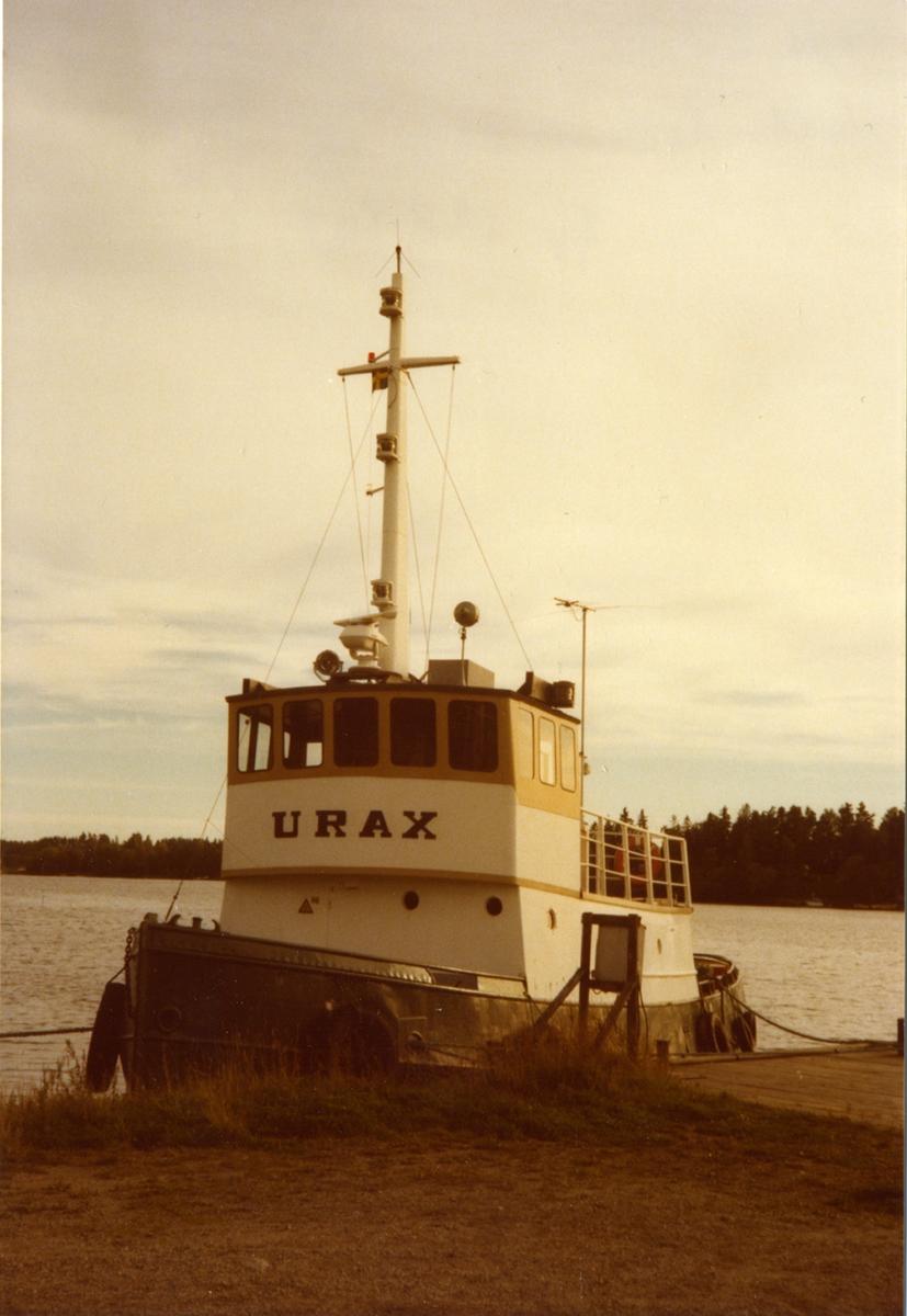 bogs. Urax, fotograferad i Stallarholmen, 23/9-79