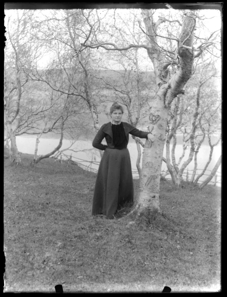 Kvinne ved bjørketre
