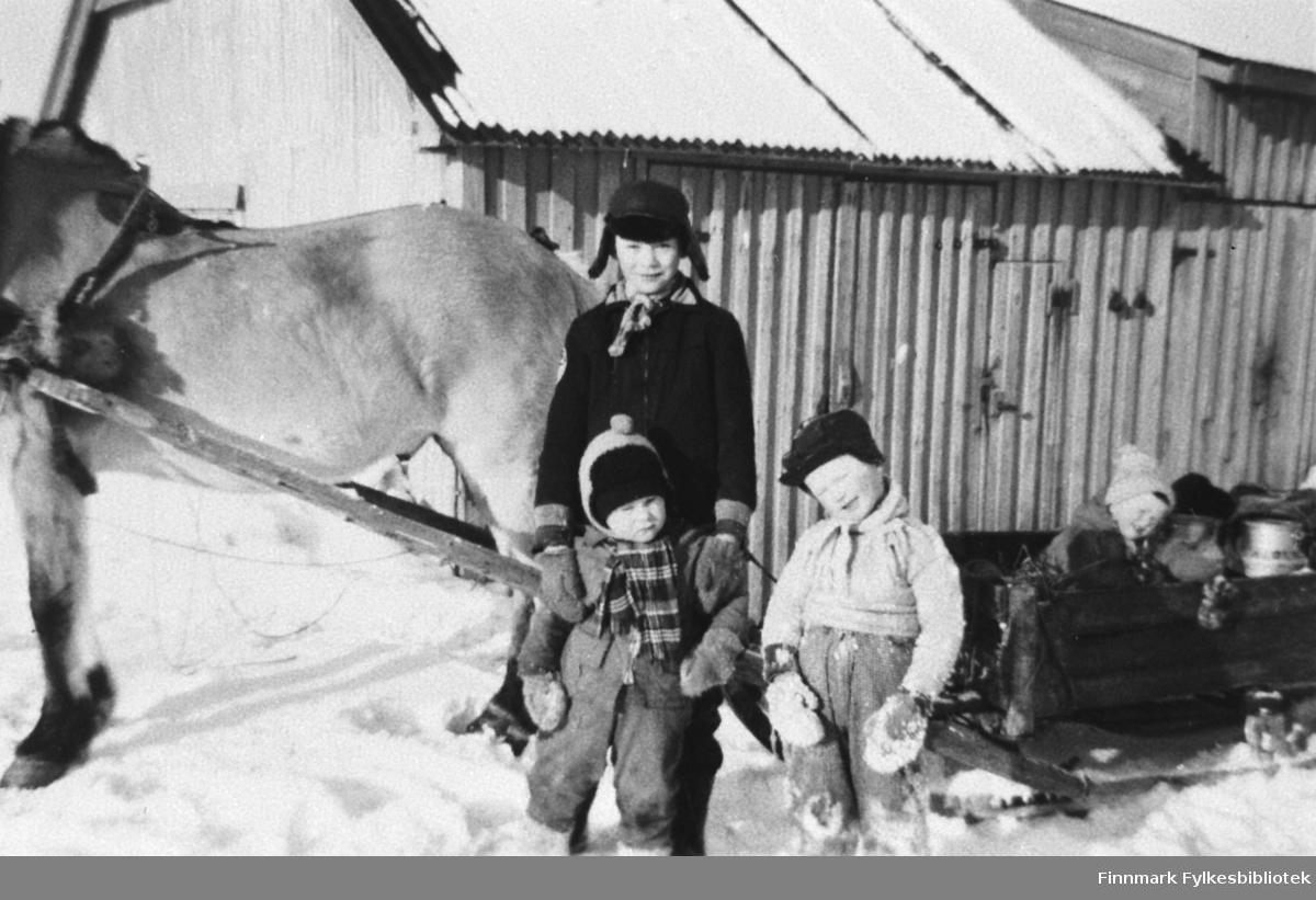 Bildet viser unger i Kiberg ved hesten til Gothart Eriksen.