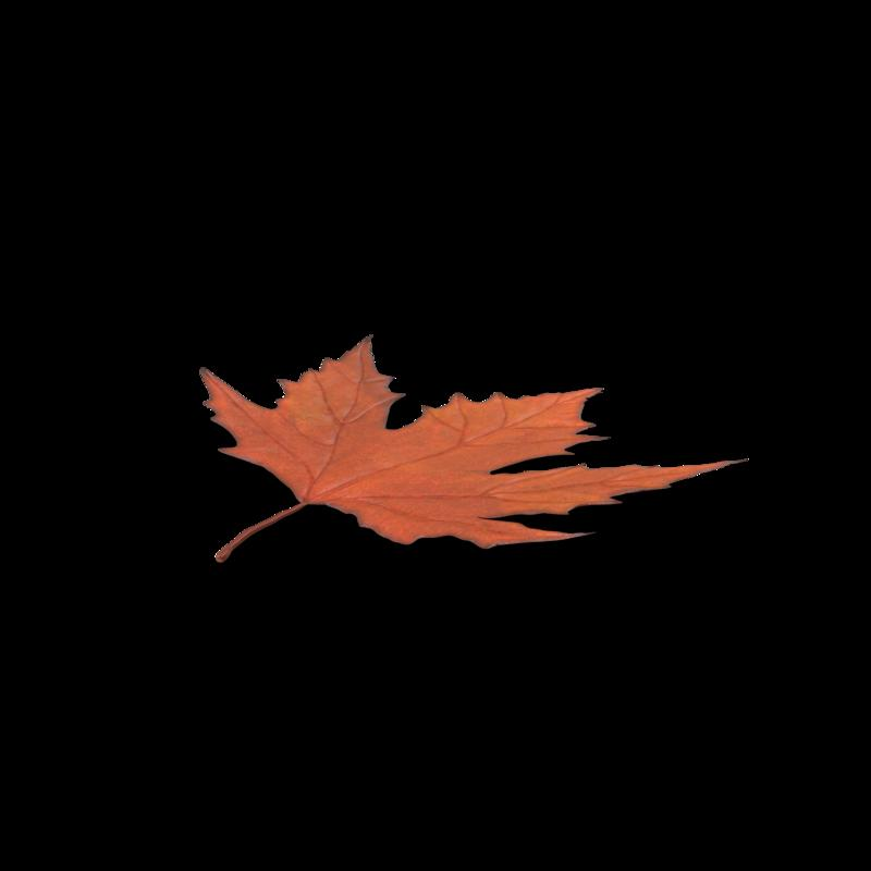 Maple_Leaf.G03.2k.png