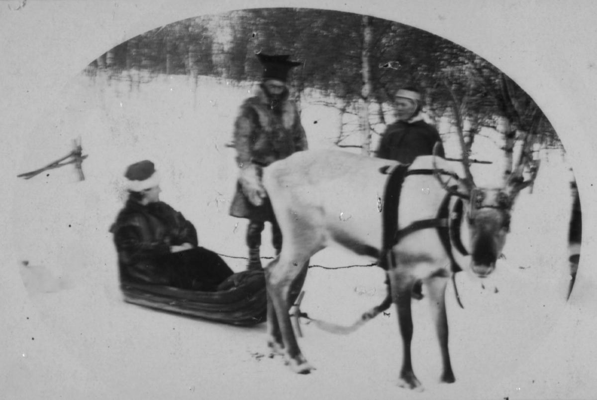 'Jeg møter finner paa min vei.' En kjørerein drar en pulk med en person - er det fru Wessel?. To samer, en mann og en kvinne, står ved siden av. Mannen er kledt i pesk og stjernelue.