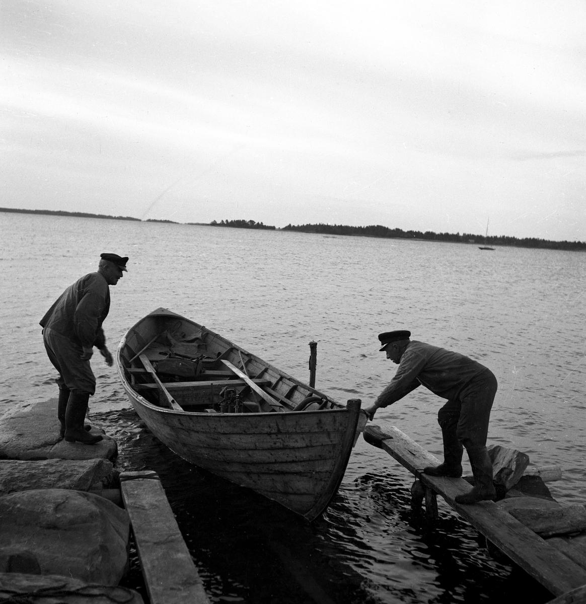 Hammaröfiskare i arbete.