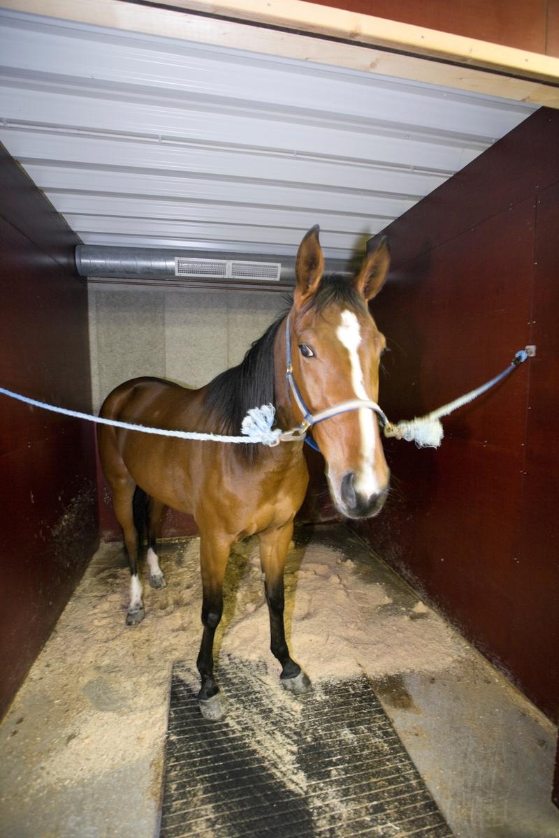 Svømme- og rehabiliteringssenter for hest. Hest venter på svømmeturen.