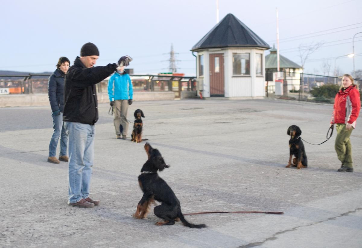 Dressurkurs for hund. Hund og hundeeier øver på instruks.