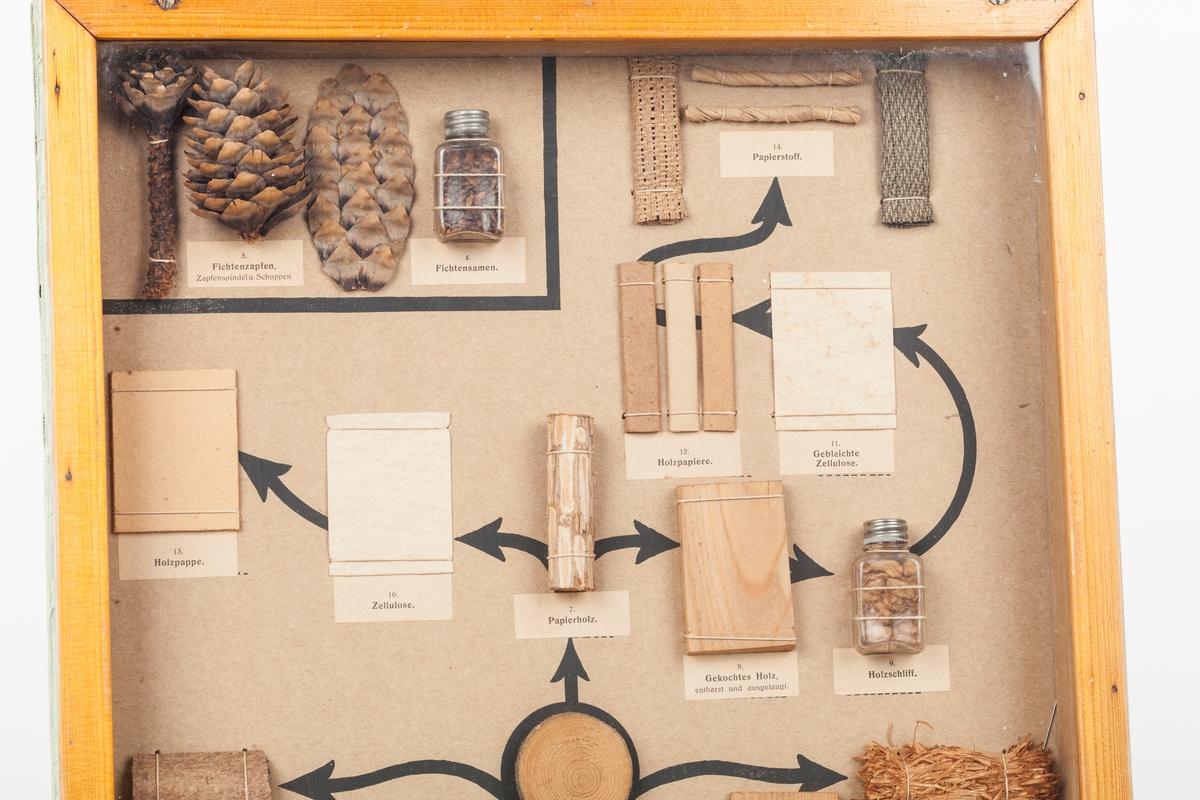 Kasse med glass foran.  viser furutre fra frø og stamme til ferdige produkter