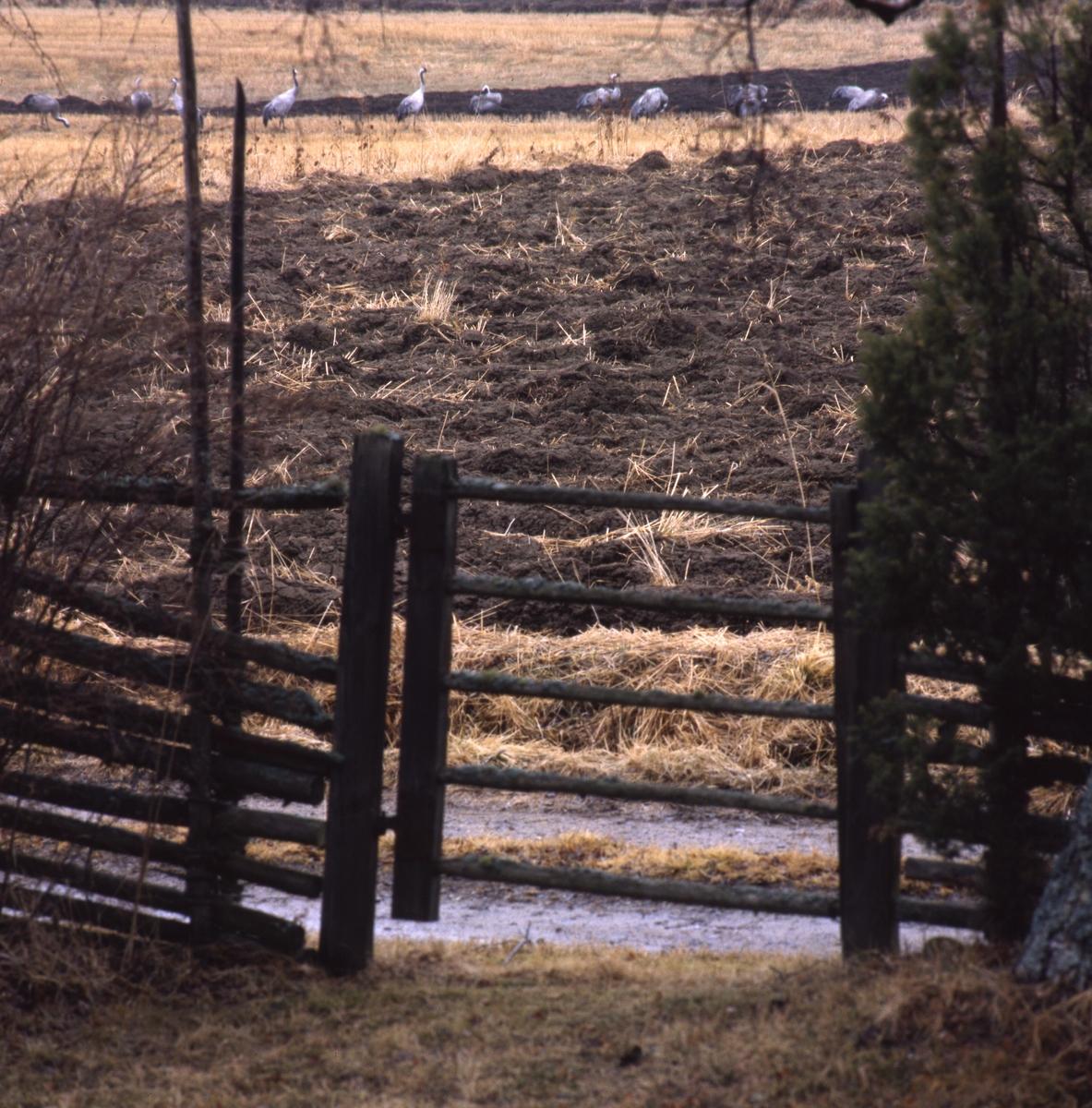 """Tranflocken sedd mot byn genom """"lillgrinden"""" maj 1996."""