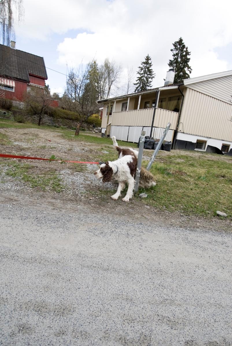 Hunden Balder på tur.