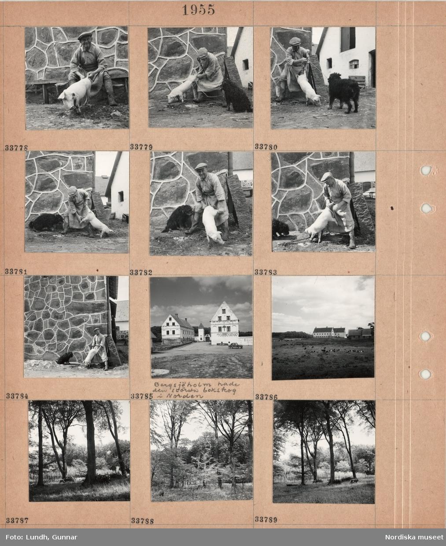 """Motiv: (ingen anteckning) (Bjärsjöholm) ; En man åller en gris i svansen, en man håller en gris i bakbenen, exteriör av ett slott med fotograf Gunnar Lundhs bil parkerad """"Bergsjöholm hade den största bokskog i Norden"""", kor betar på en äng med ett slott i bakgrunden, träd i en skog och fotograf Gunnar Lundhs bil parkerad."""