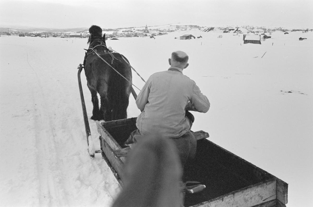 Møkkakjøring med hest og slede på Røros.
