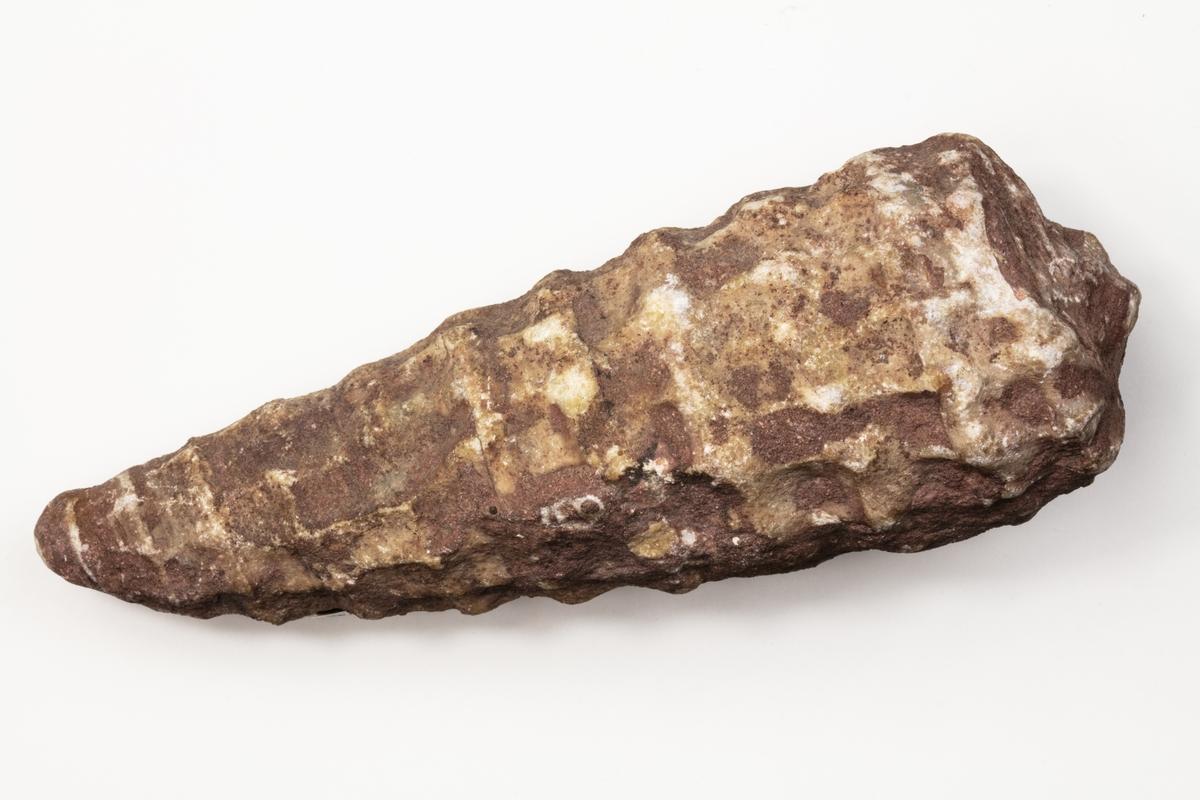Fossil av ett blötdjur. Var exemplaret kommer ifrån är okänt.
