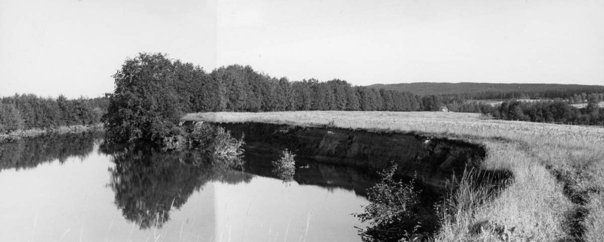 """Flomskader i noret mellom Vingersjøen og Glomma etter høstflommen i 1956. Fotografiet skal være tatt nedenfor den såkalte """"kanalen"""" (jfr. SJF. 1990-01888 og SJF. 1990-01890).  Til venstre ses ei stilleflytende elv med lauvskog langs breddene og med kornåkrer på de flate sandslettene innenfor.  I forgrunnen ser en hvordan flomvannet har gravd seg inn i elvebredden, tatt med seg kantvegetasjon og et betydelig antall kubikkmeter masse fra det innenforliggende jordbruksarealet.  I album """"GF 32"""" er fotografiet sammenmontert fra to kopier, antalelig i mangel av vidvinkelobjektiv som kunne fange opp hele erosjonssona."""
