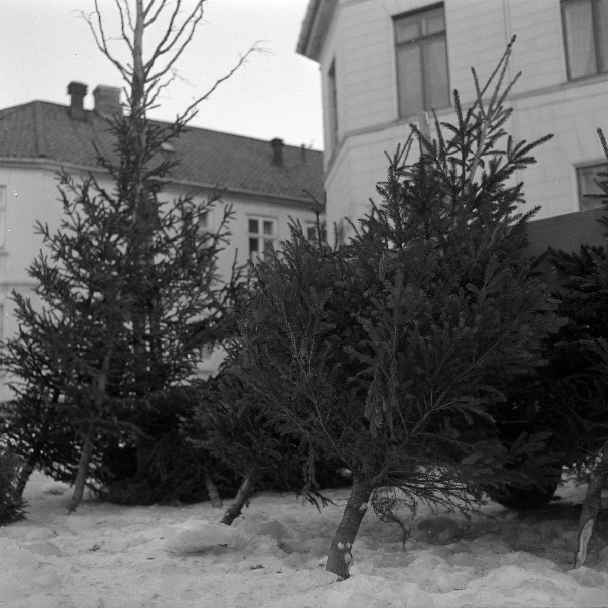 Juletresalg på Torvet