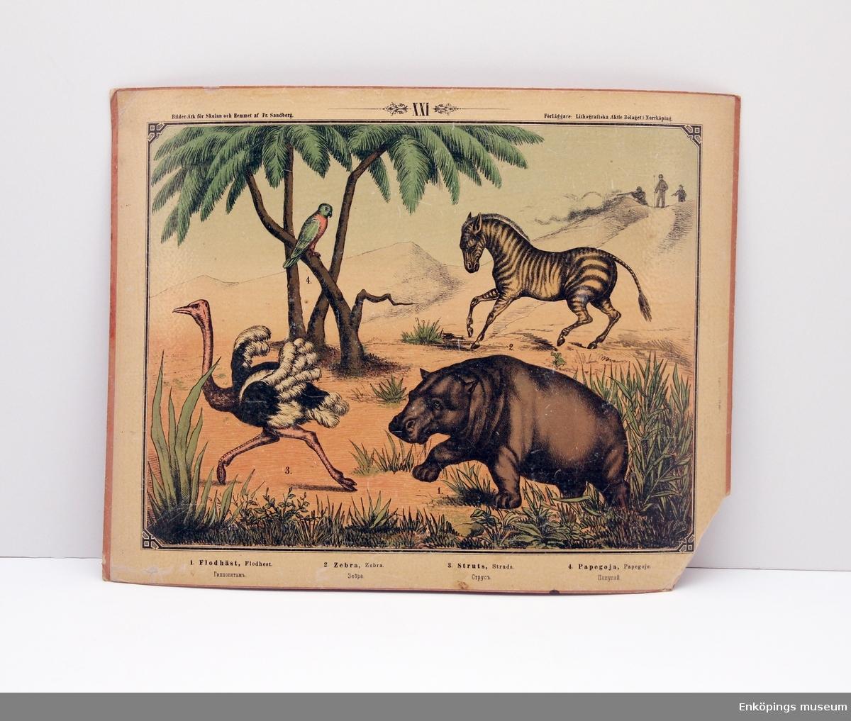 Skolplansch som visar olika däggdjur i Afrika. Från Litografiska Aktie Bolaget i Norrköping.  Skolplanscher användes i de flesta skolämnen under 1900-talet. År 1900 kom en ny läroplan (normalplan) där lektionerna skulle åskådliggöras för eleverna för att de skulle förstå bättre. Detta gjorde att räknestavar, skolplanscher, stora kartor och den svarta tavlan blev viktiga skolredskap.