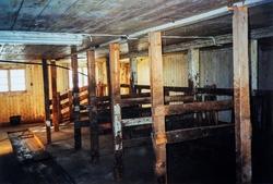 Interiør bilde fra fjøset på Småbruket Haga, 82/13, i Vang.