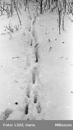 Vinterbilder på A 6 övningsfält. Harspår.