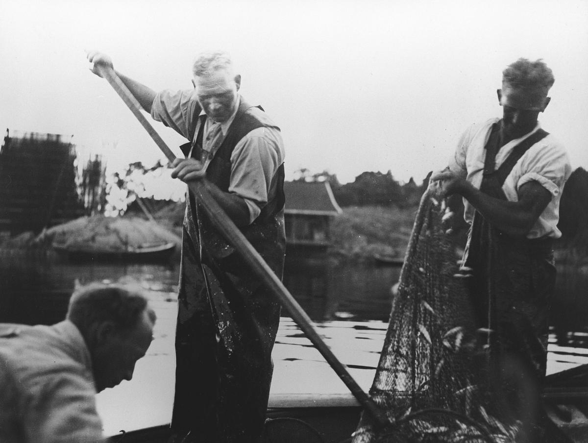 Tre menn med garn fullt av fisk.