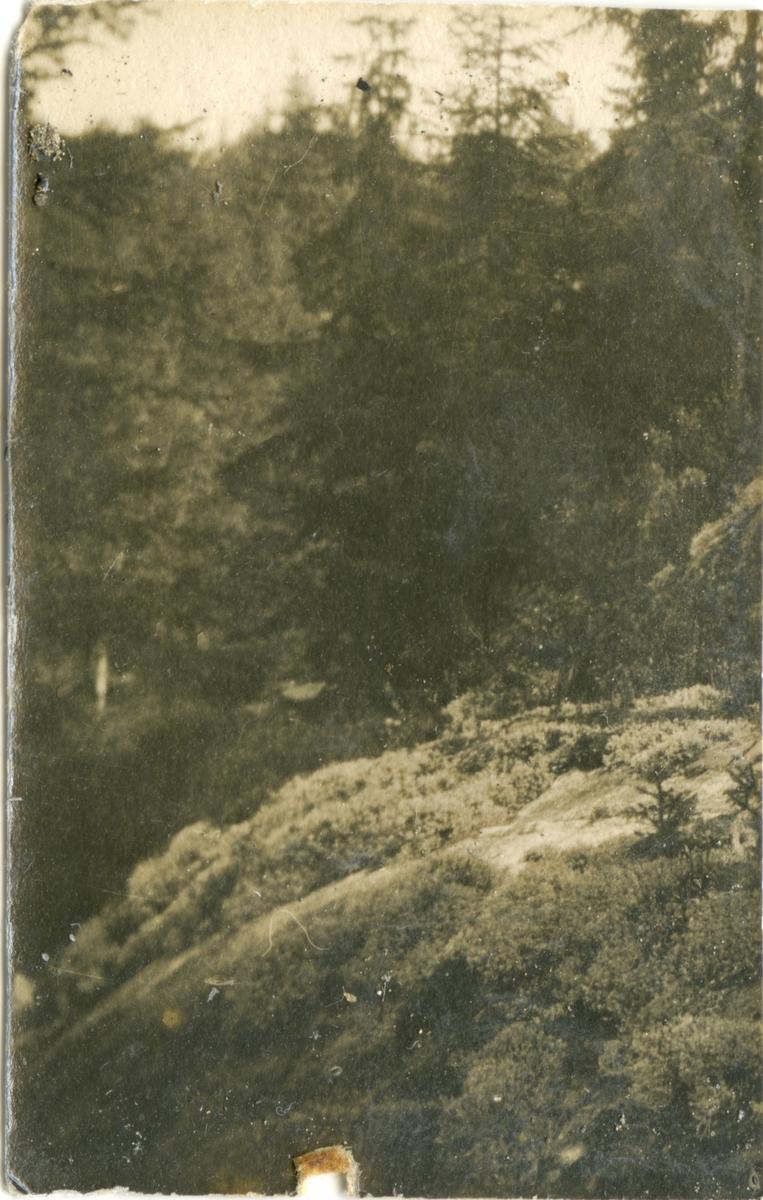 Trolig Anna Brenni, f. Holm (1897-1971)